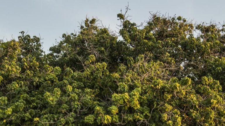 Des pratiques d'arrosage judicieuses pour les arbres et arbustes nouvellement plantés