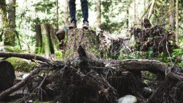 Faire face aux arbres endommagés par le vent