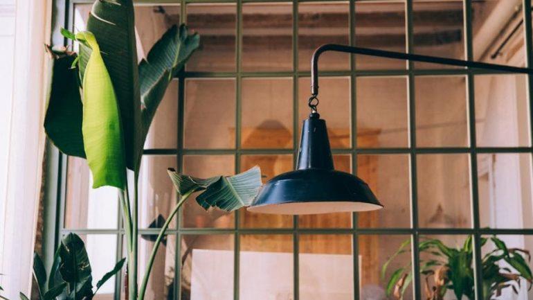 De quelle quantité de lumière les plantes d'intérieur ont-elles besoin ?