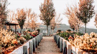 Plantation et transplantation d'arbres et d'arbustes